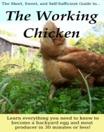 The Working Chicken: Learn everything you need to know to become a backyard egg and meat producer in 30 minutes or less! - Book Cover